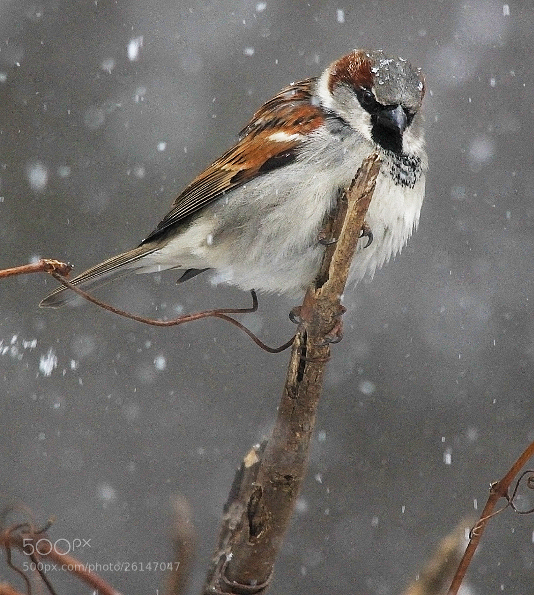 Photograph Snow by Brian Masters on 500px