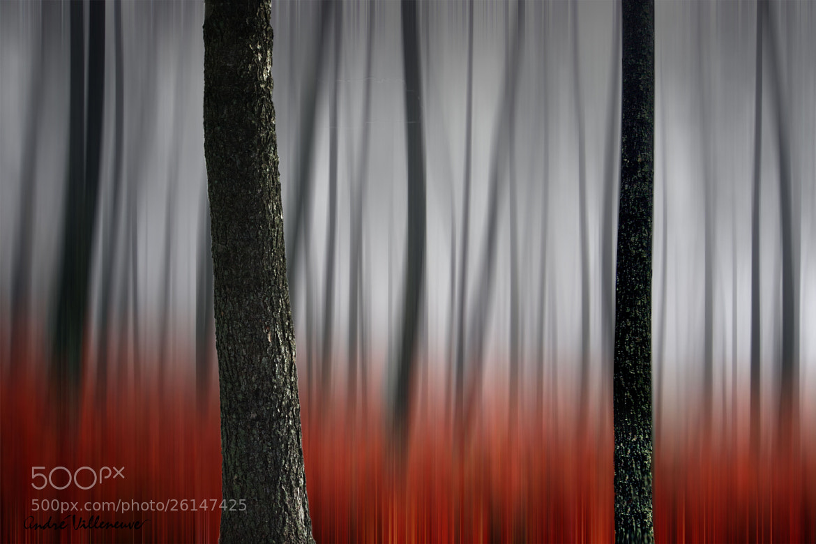 Photograph Octobre by Andre Villeneuve on 500px