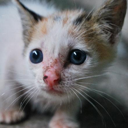 kitty cutie, Nikon D60, AF-S DX VR Zoom-Nikkor 18-55mm f/3.5-5.6G