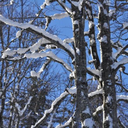 Kolasin Winter 2018, Nikon D90