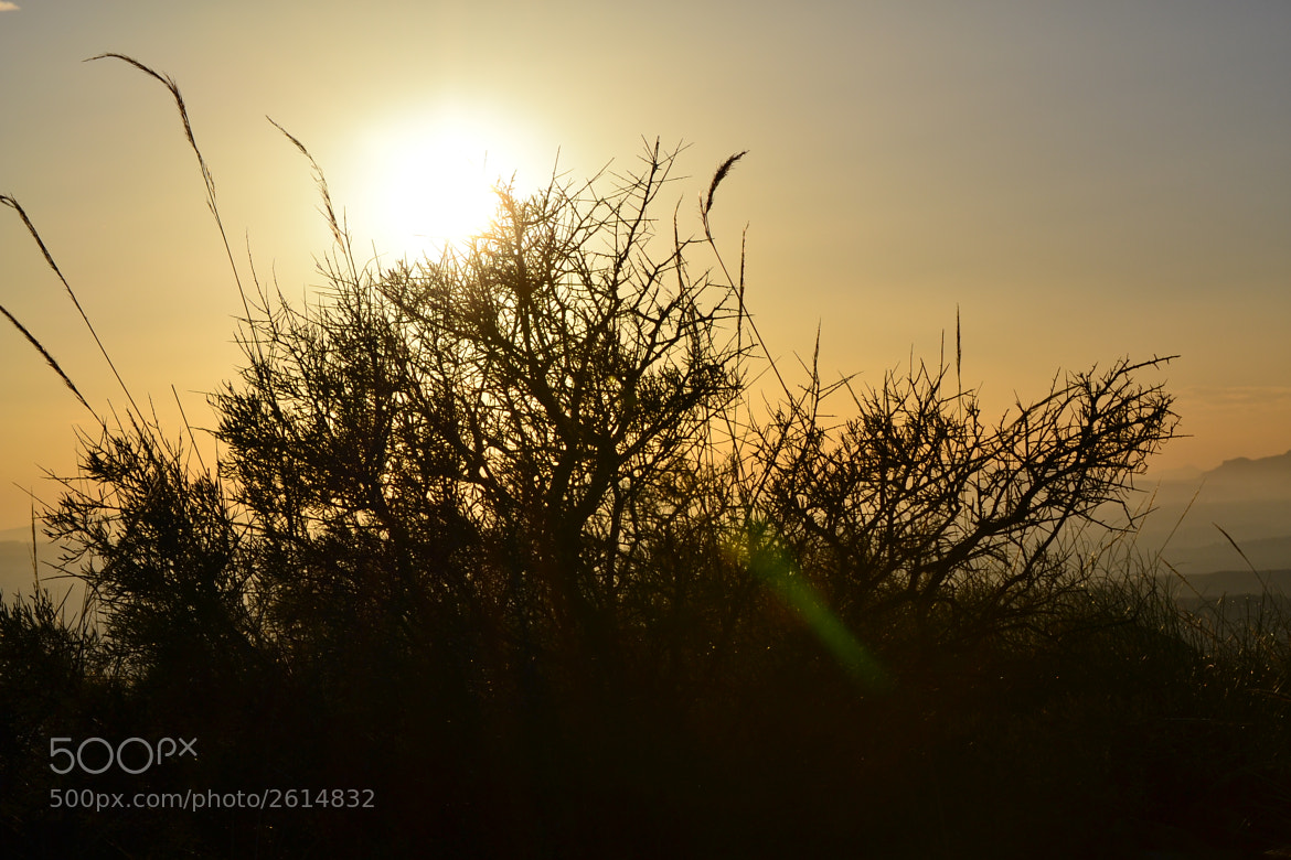 Photograph Watching the sun by Amy Silhouette on 500px