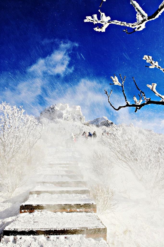 Photograph Blizzard hwinalrideon by hyun-su-Kim on 500px