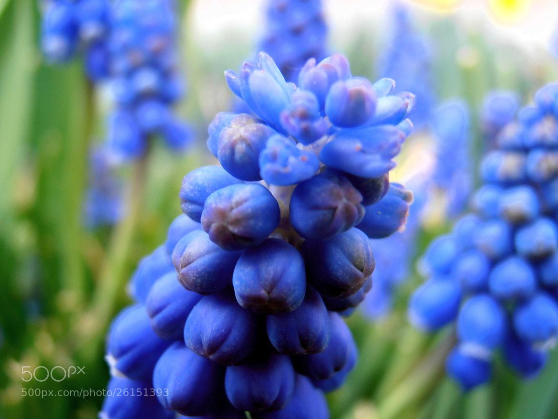Photograph Nice blue ... by Snezana Petrovic on 500px