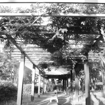 green wisteria trellis with, Canon EOS M6