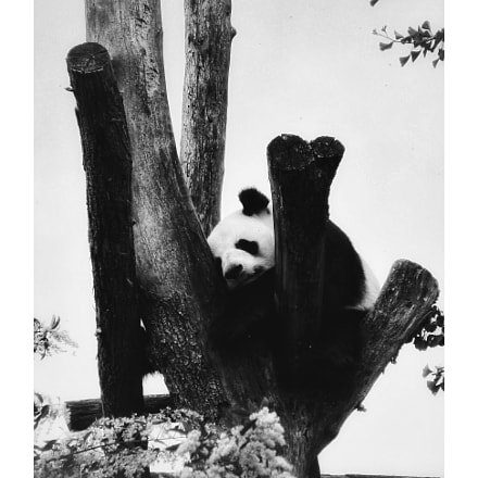 Panda pop , Canon POWERSHOT SX200 IS