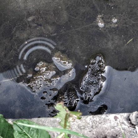 Frogs, Canon POWERSHOT SX510 HS