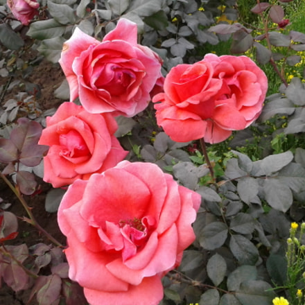 Beautifull Flower, Samsung Galaxy J2