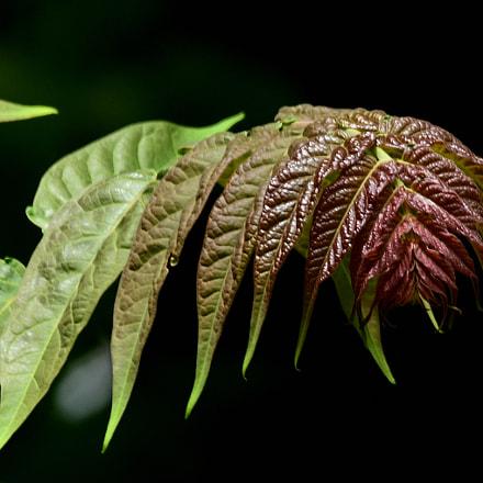 Naturaleza, Nikon D7500