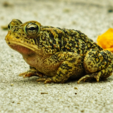 That's Mr. Toad To, Nikon COOLPIX L840