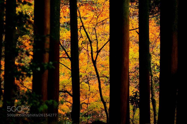 Photograph Untitled by Masaki Eitoku on 500px
