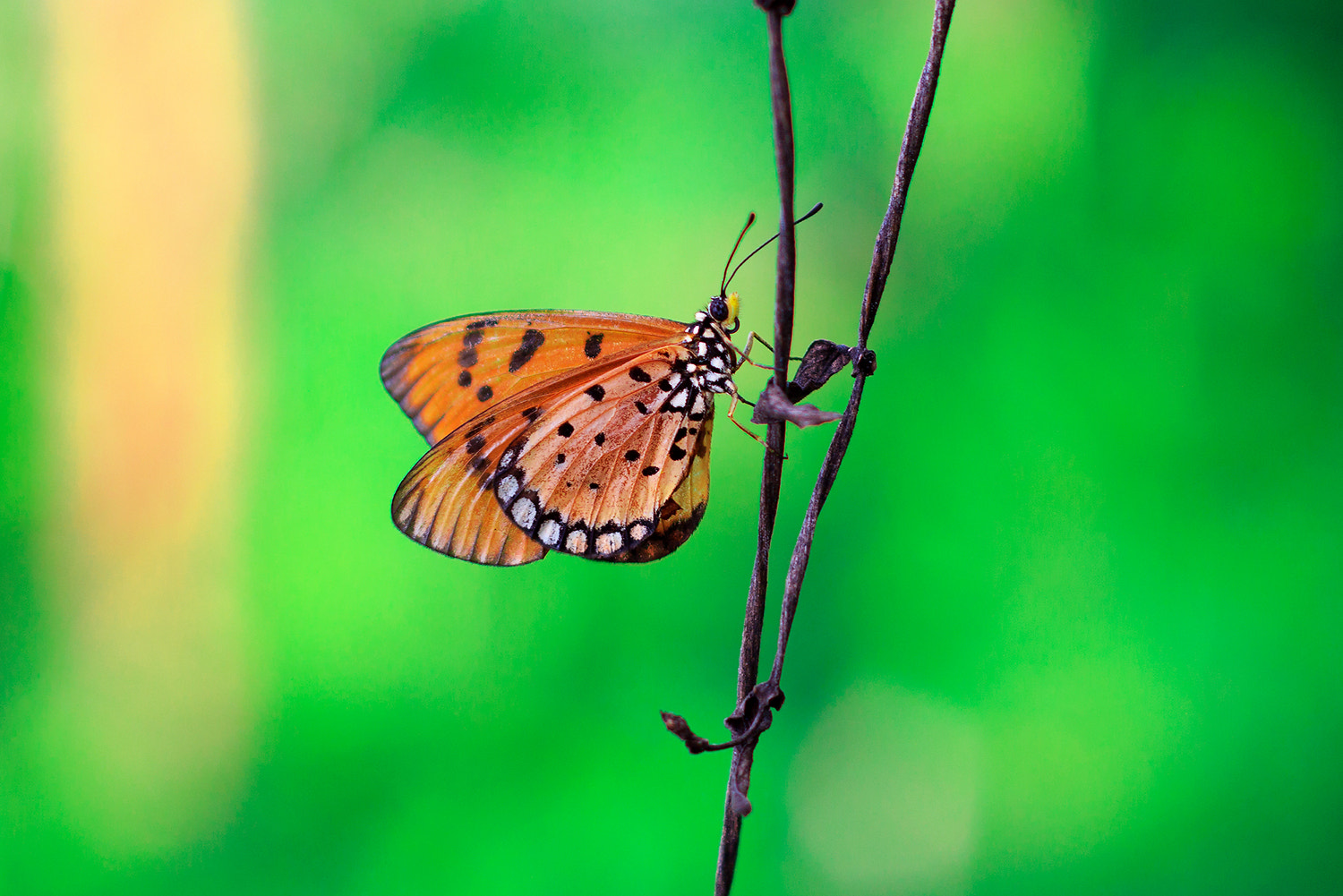 Photograph Butterfly by Prathak Kamyam on 500px