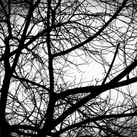 Branches, Fujifilm FinePix HS10 HS11