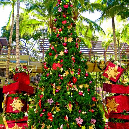 Waikiki Christmas Tree, Sony DSC-W290