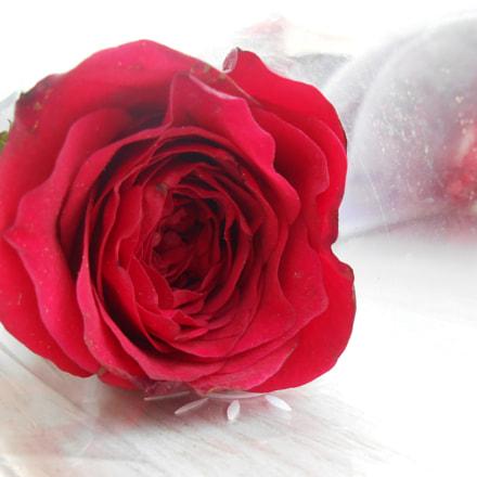 Rose, Nikon COOLPIX S2700