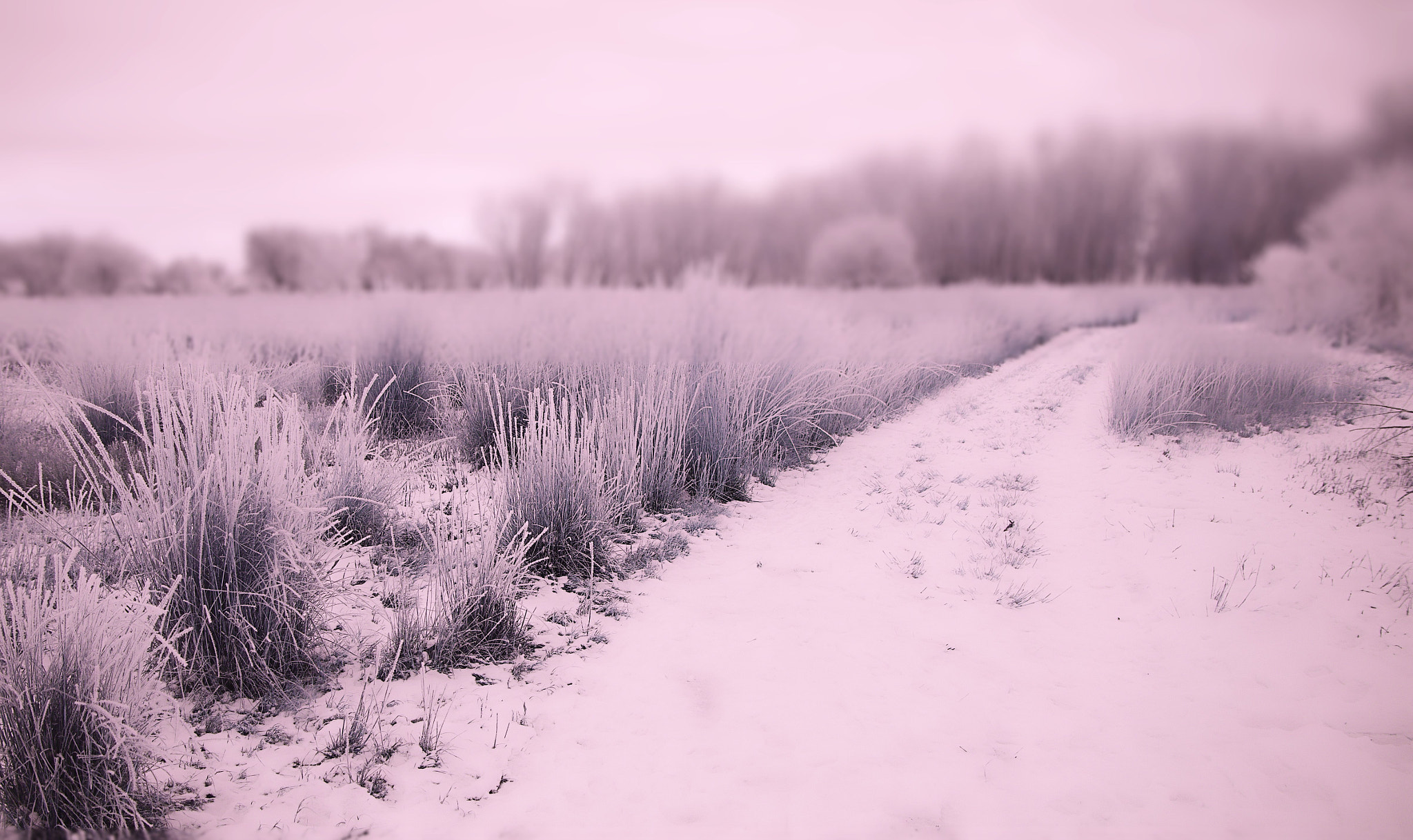 Photograph Cold Path by Johnny Gomez on 500px