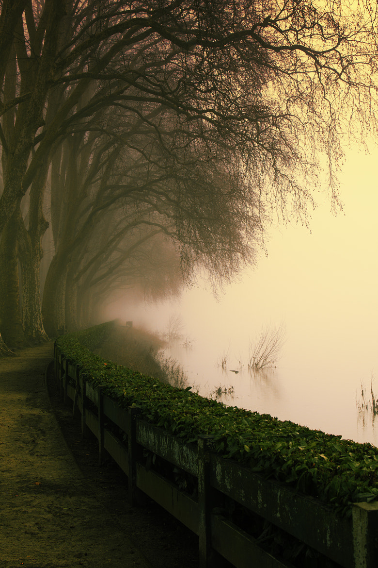 Photograph Path in the mist by Pierre de Izarra on 500px