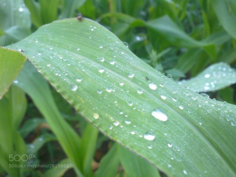 Photograph drop on the blat  by Javid Mushfigoglu on 500px
