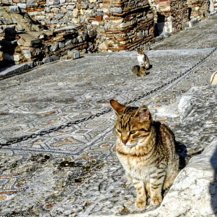 Cat Occupants of Ephesos, Panasonic DMC-FZ28