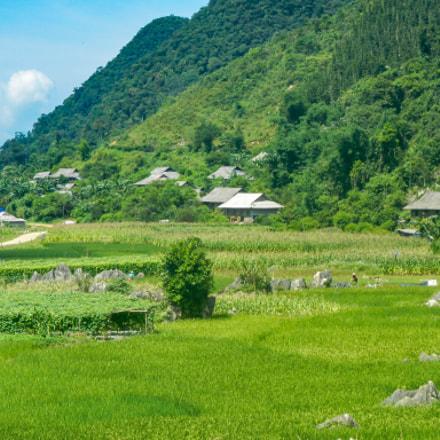 Rice farms, Nikon COOLPIX AW100