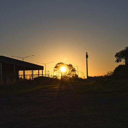 Sunset Tree, Nikon D750, AF-S Micro Nikkor 60mm f/2.8G ED