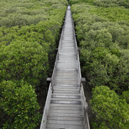 My path between Mangrove, Canon EOS 5DS R, Canon EF 16-35mm f/2.8L II