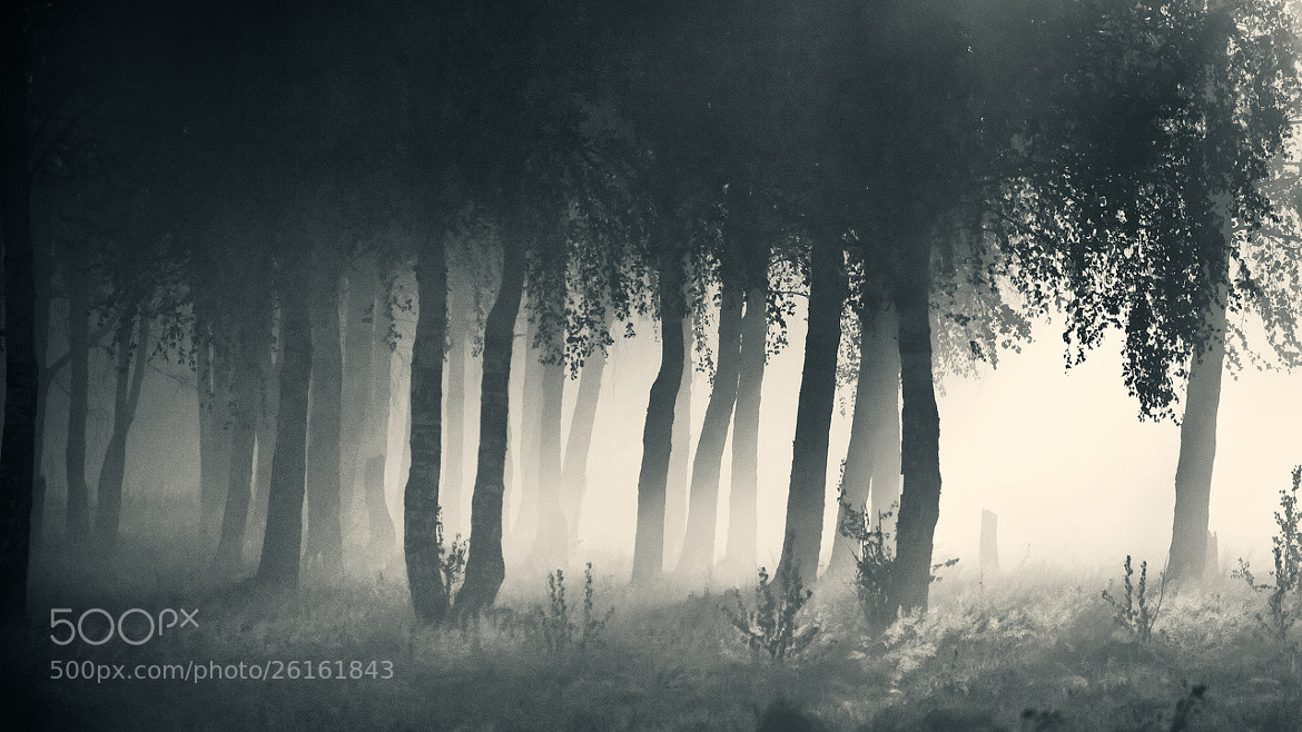 Photograph Grove (b/w version) by Alexei Mikhailov on 500px