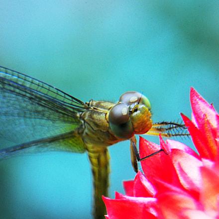 Firefly, Nikon D90, AF-S DX Zoom-Nikkor 18-135mm f/3.5-5.6G IF-ED