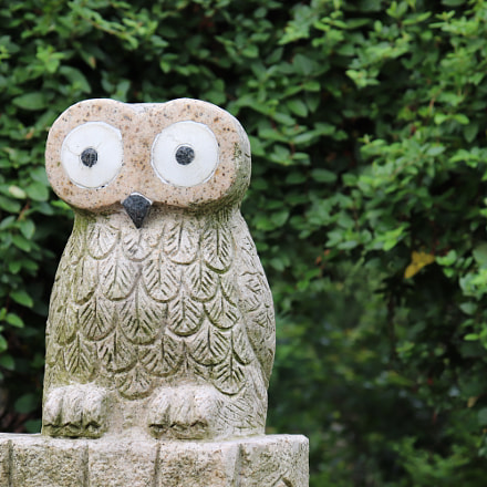 The owl, Canon EOS 200D, Canon EF-S18-55mm f/4-5.6 IS STM