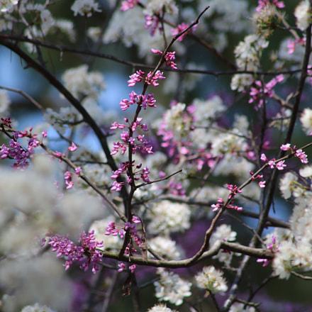 Spring Memories 7015, Canon EOS REBEL T6I, Canon EF 75-300mm f/4-5.6 USM
