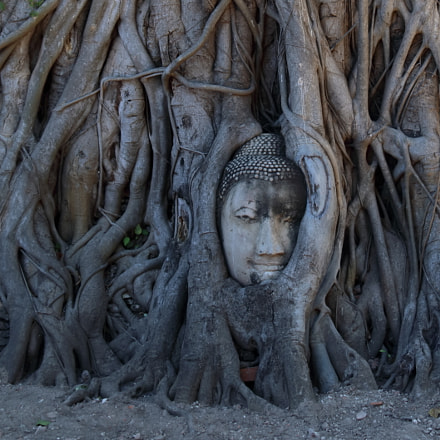 The Buddha tree root, Canon EOS 80D, Canon EF 24-105mm f/4L IS
