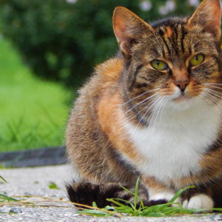 chillcat, Nikon COOLPIX L830
