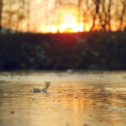feather, Nikon COOLPIX L830