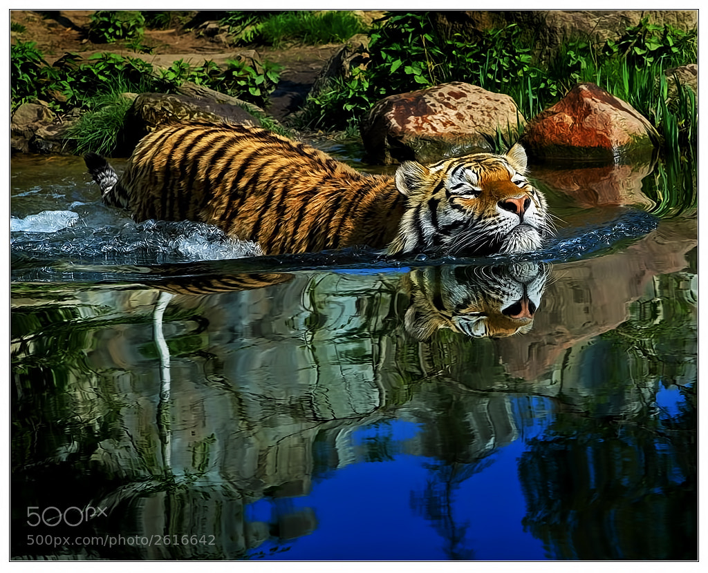 Photograph Dive into another World by Klaus Wiese on 500px