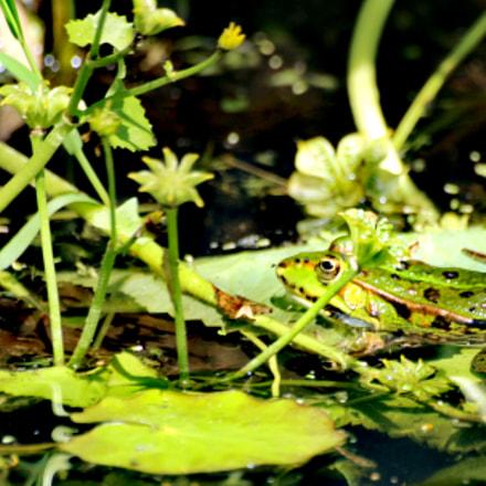 Frog, Canon EOS 2000D