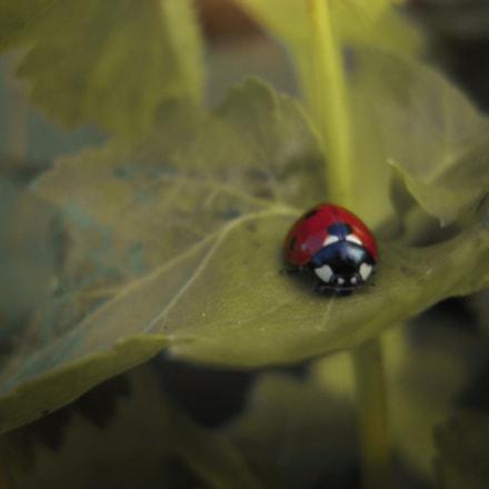 .. lady ladybug ♥, Nikon COOLPIX L22