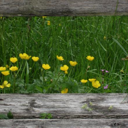 Yellow, Canon IXUS 220HS