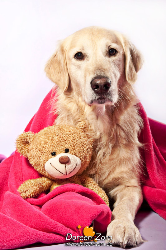 Photograph Not without my teddy by Doreen Zorn on 500px