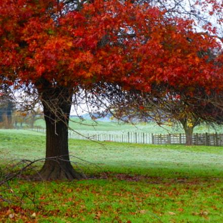 Autumn Leaves havelock North, Panasonic DMC-TZ70