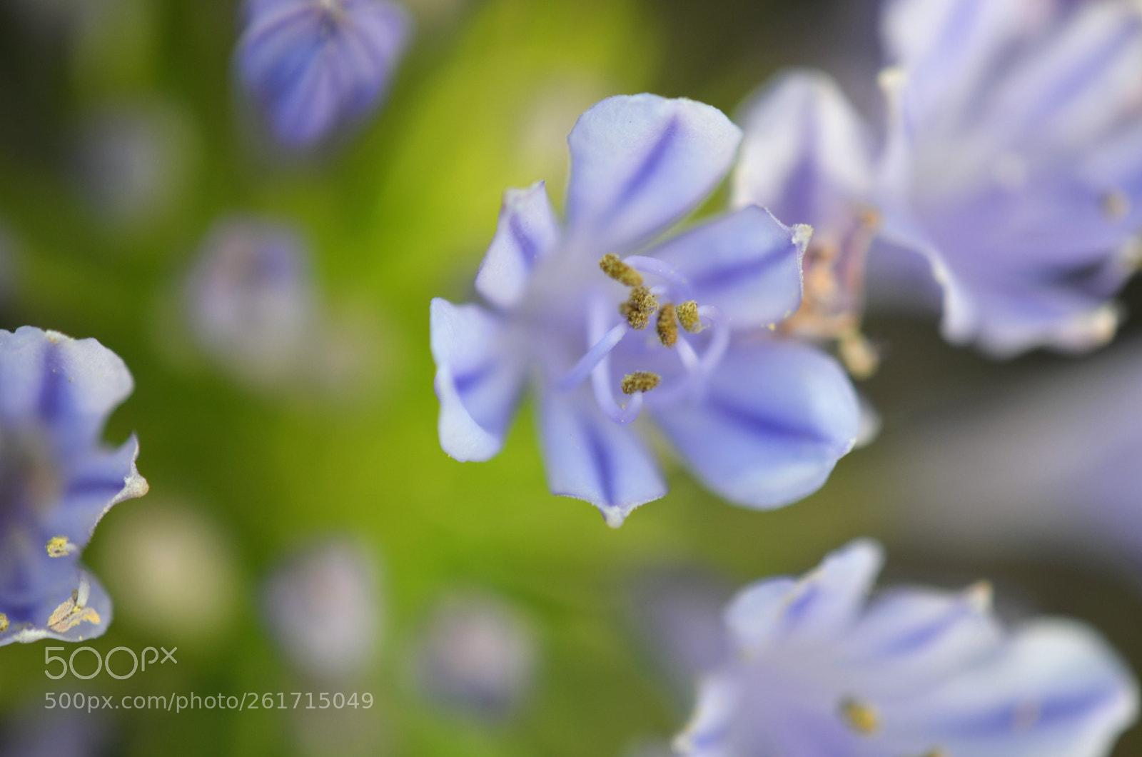 Flower bunch, Nikon D5100, AF-S DX Micro Nikkor 85mm f/3.5G ED VR