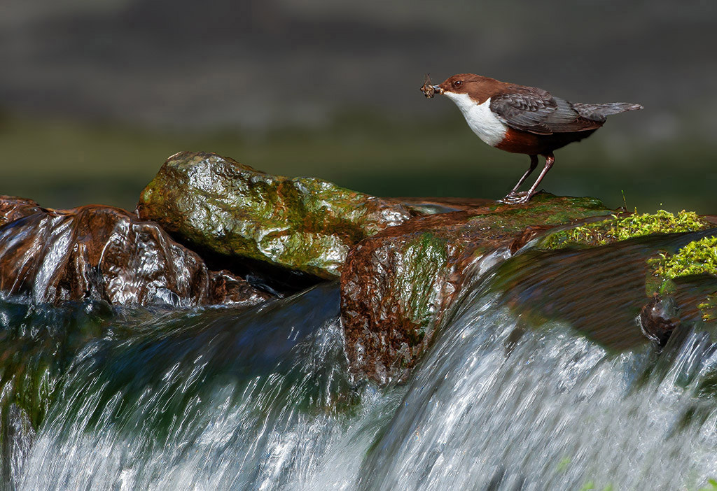 Photograph dipper falls by TomMelton on 500px