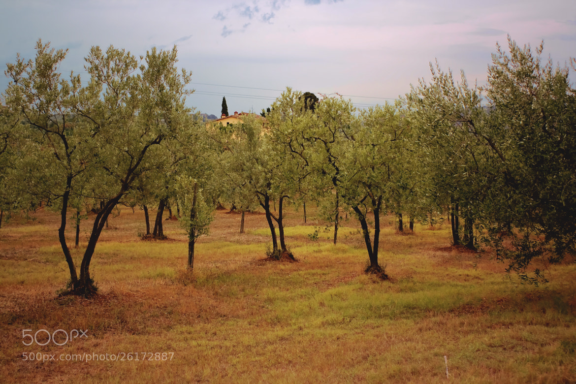 Photograph olive by Filippo Giovannini on 500px