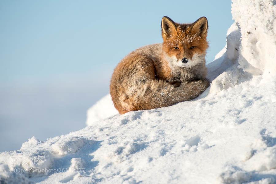 Photograph *** by Ivan Kislov on 500px
