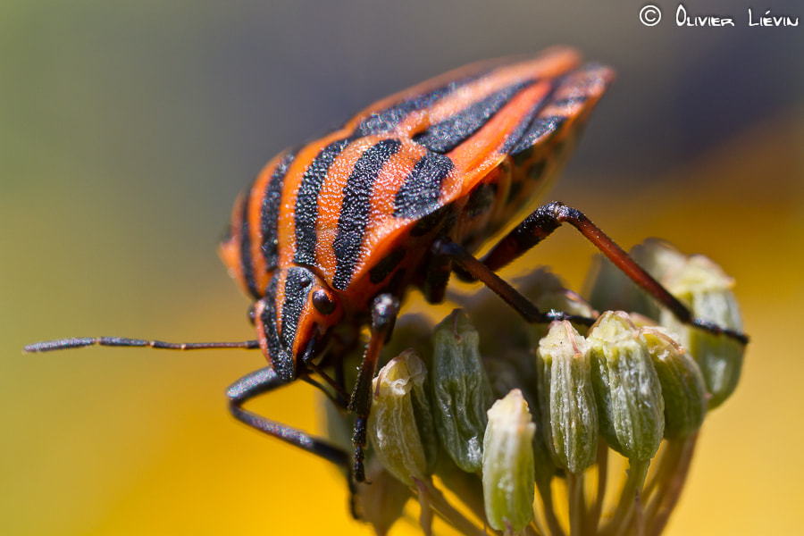 Photograph The little big one by Olivier Liévin on 500px