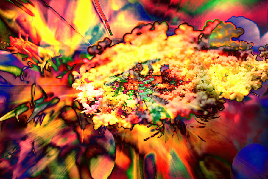 Explosion of flowers