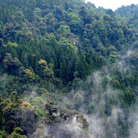 Neora Valley National Park, Nikon COOLPIX P520