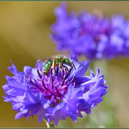 Green and Purple, Nikon D850
