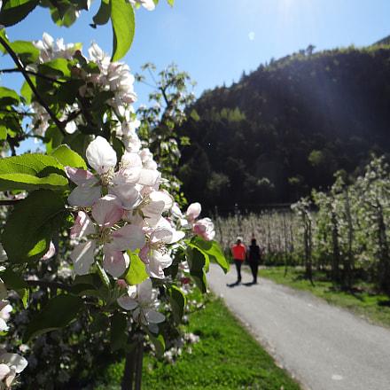 Im Südtirol Part 1, Sony DSC-HX200V