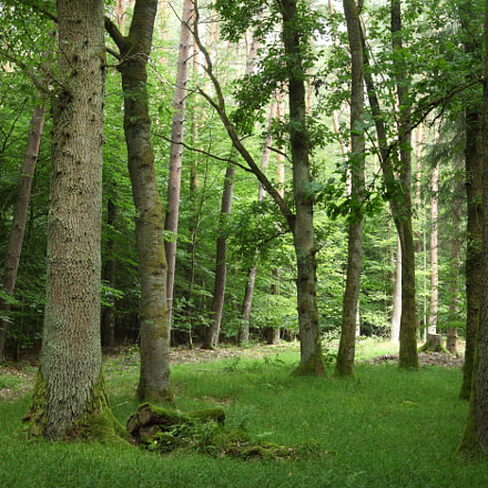 Forest, Canon EOS 5D MARK II, Canon EF 28-80mm f/3.5-5.6