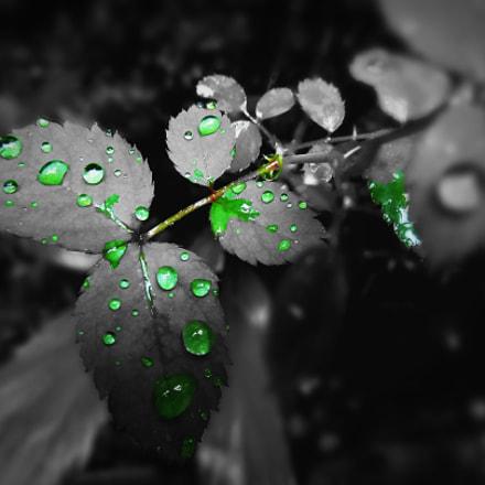 Green drops , Canon POWERSHOT SX150 IS