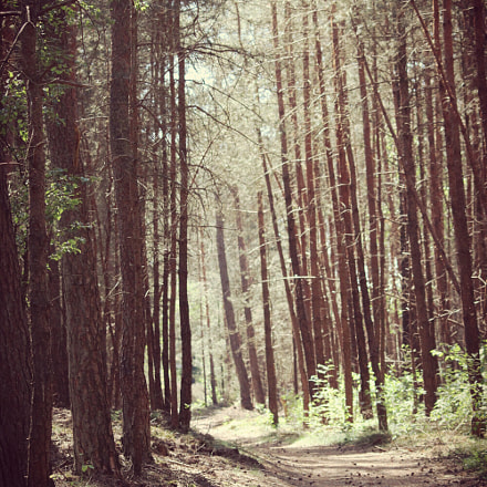 Forrest, Canon EOS 2000D